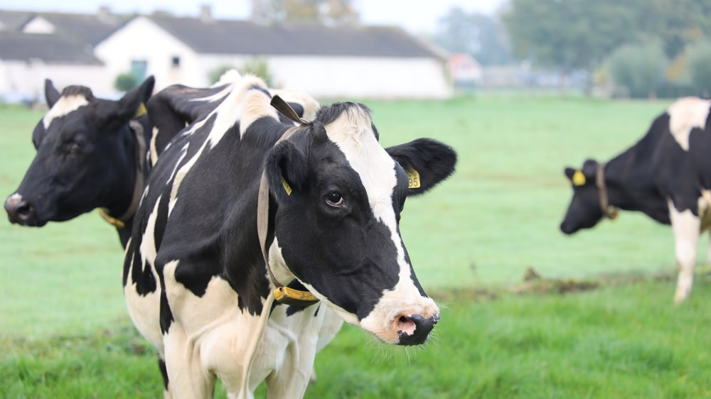 Sri Lanka farmgate fresh milk prices soar as demand outpaces supply