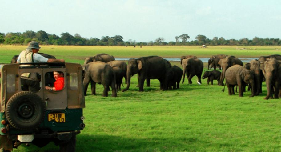 Wildlife Officers launch strike