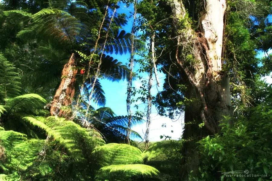 Abel Tasman Coastal Track Bush