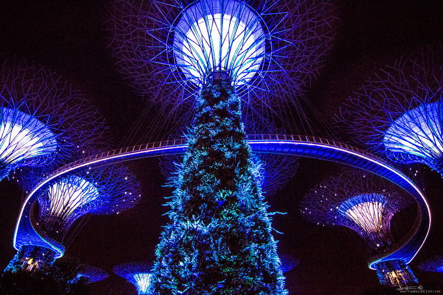 Supertree Grove in the Gardens By The Bay, Singapore, Singapore Gardens by the Bay, Singapore Supertree Grove, Supertree Grove, Singapore guide, travel Singapore, what to see in Singapore, top things to see in Singapore, Singapore travel guide,