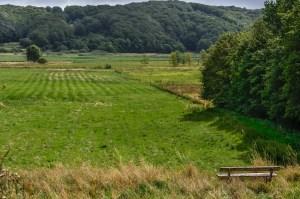independentpeople denmark jutland forest