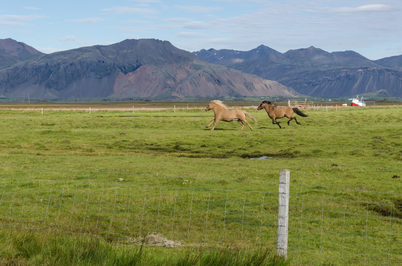 independent people iceland horses