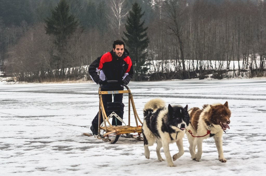 Dog sledging in Estonia