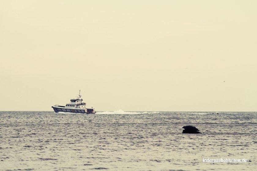 Robbe und Schiff