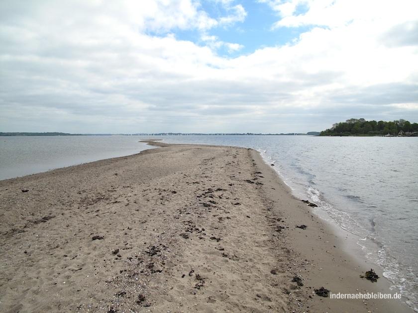 Sandzunge