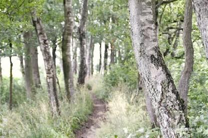 Wanderweg Bokel-Muehle