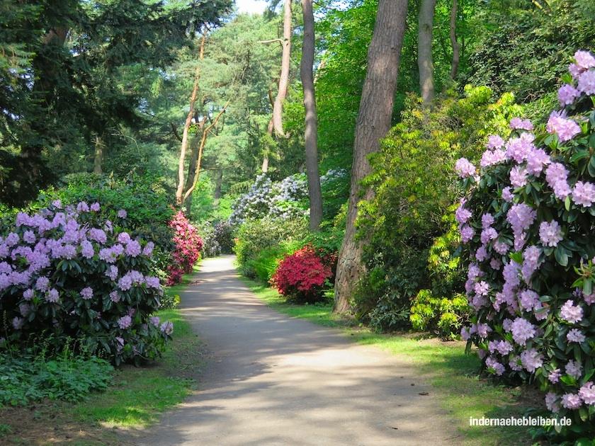 Rhododendronpfad