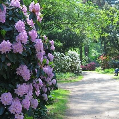Rhododendronpfad Stadtpark