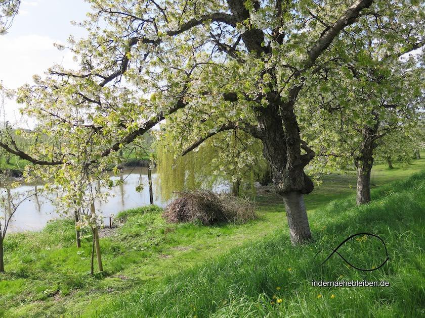 Fruehling Altes Land