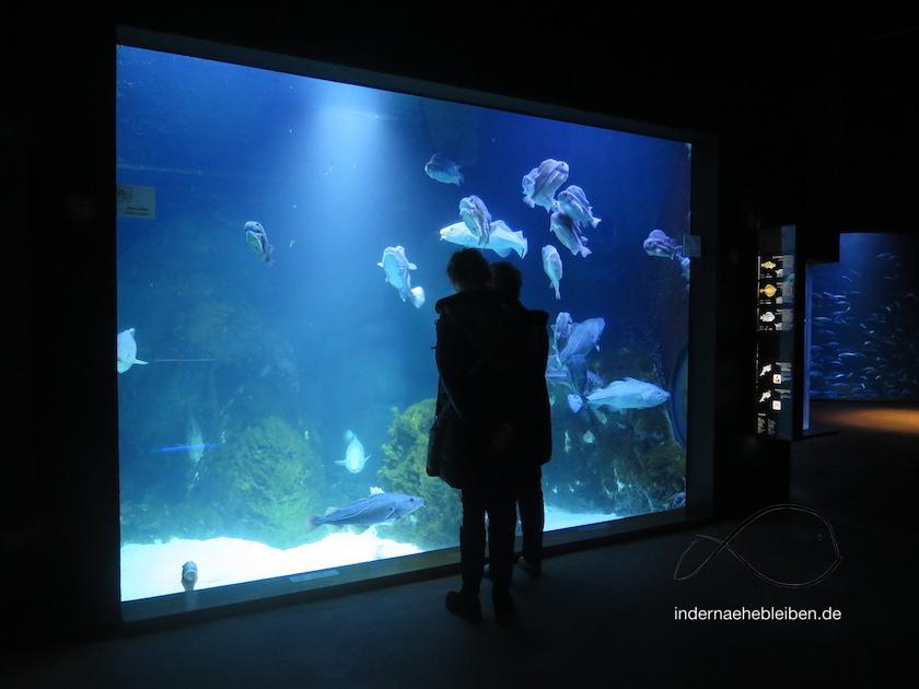 Meereshasen