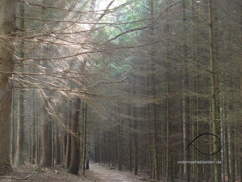 Wald Albersdorf