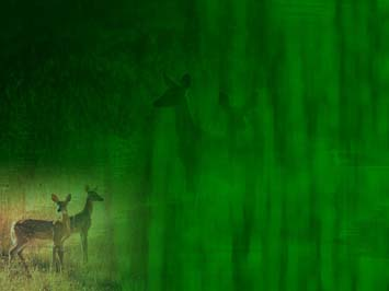 Deer 01 PowerPoint Templates