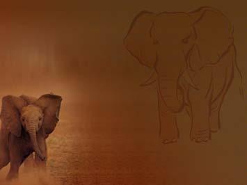 Elephant 03 PowerPoint Template