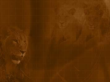 Lion 05 PowerPoint Templates