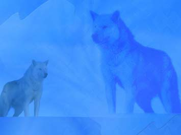 Wolf 02 Powerpoint Templates