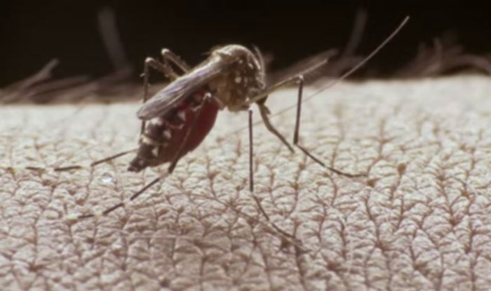 9 Tested Positive For Dengue In Jammu