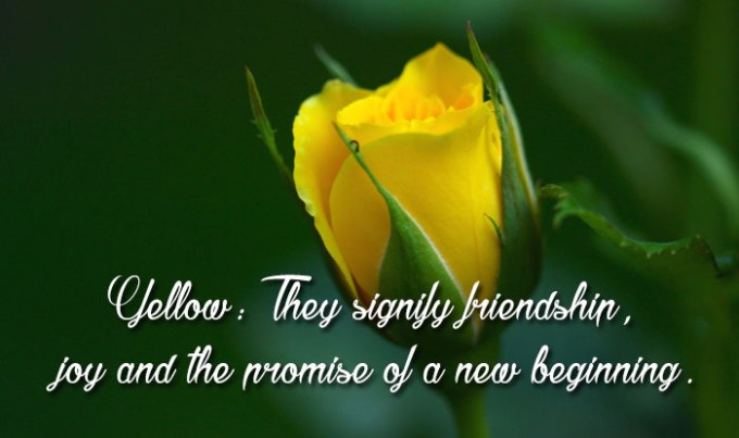 Yellow rose day images hd siewalls happy rose day 2017 importance and significance of each colour mightylinksfo