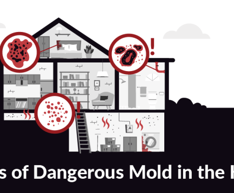 Dealing With Dangerous Mold In Your Home