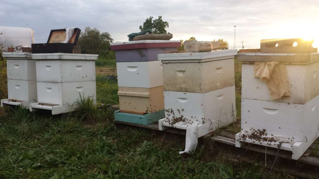 Beekeeping Tips for June and July
