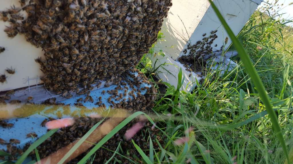 Beekeeping Tips for September
