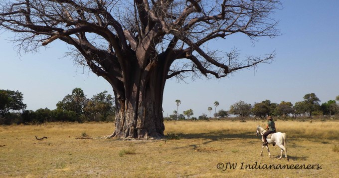 To the Baobab!!!