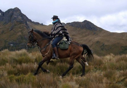 Tostado: A true gent, so laid back and chilled and unbelievably fit!! He would canter for miles, climb and climb and climb in high altitude conditions without even breaking a sweat. We faced some scary narrow paths with sheer, sheer drops but nothing fazed this genuine boy.....not even the mighty Cotopaxi!