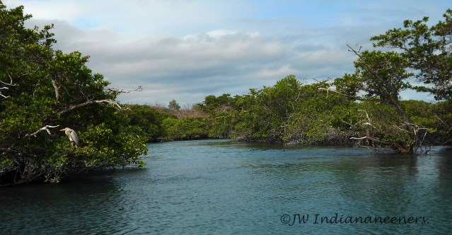Wonderful marine safari through mangroves at Elizabeth Bay.