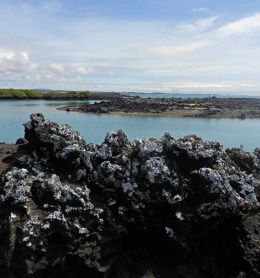 The Galapagos Islands are not your average tropical islands......they are so much more!
