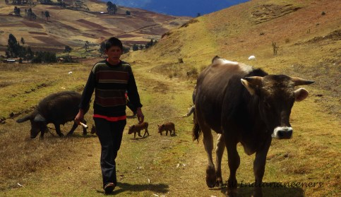 The children must help with farming and herding duties.