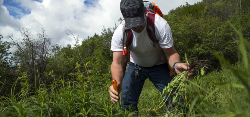protecting vegetation from invasive plant species