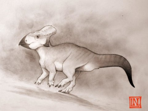 dinosaur from the Late Cretaceous period of eastern North America-indianbureaucracy