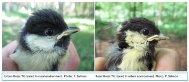Urban bird species risk dying prematurely due to stress-indianbureaucracy