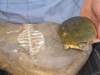 turtles_shells_indianbureaucracy