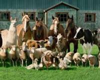 Farm Animals_indianbureaucracy