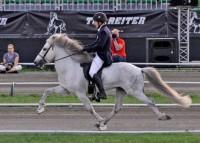 gaited horses_indianbureaucracy