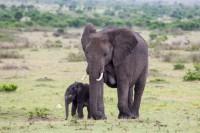 baby-african_indianbureaucracy