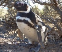 penguin_indianbureaucracy