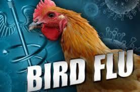 Bird Flu-indian Bureaucracy