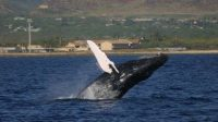 whale-songs-discovered-indian-bureaucracy