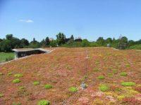 ,biodiversity ,Green Roofs-IndianBureaucracy