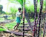 UP Govt decides to change sugarcane price fixation policy-defencespeak