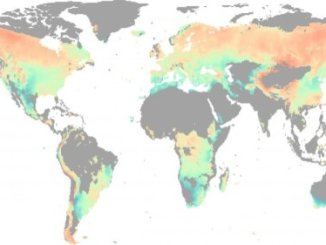 Water, not temperature, limits global forest