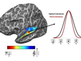 Brains of blind people adapt to sharpen sense
