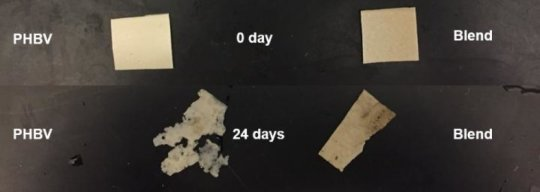 Potential for Earth-friendly plastic replacement