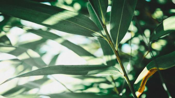 Warming: Plants are also stressed out