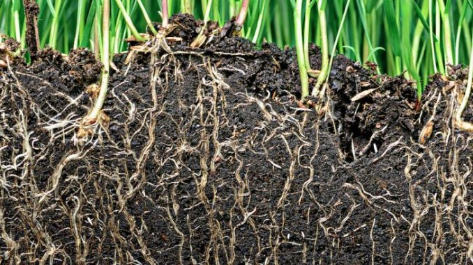 When plant roots learned to follow gravity