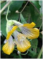 Study of flowering plant endemism of Northern Western Ghats