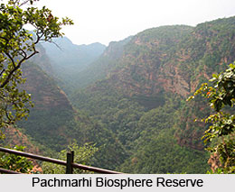 Forests and sanctuaries along Narmada Indian River