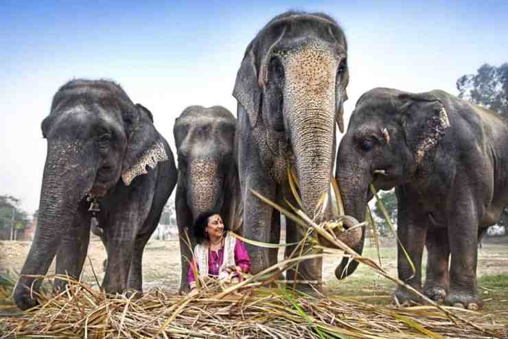 Rescued elephamts and bear sanctuaries with Wildlife SOS