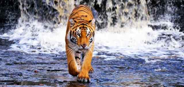 Image result for sundarban national park